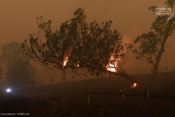 A burning gum tree is felled to stop it from falling on a car in Cobargo, Australia January 5, 2019. REUTERS/Tracey Nearmy
