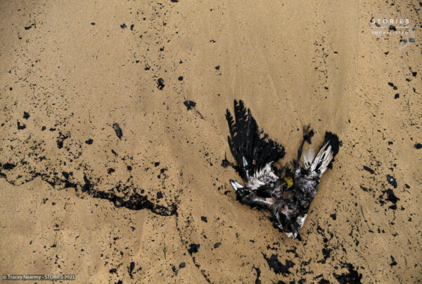 Dead Australian native birds are washed up amongst ash and fire debris on Boydtown Beach near the Nullica River in Eden, Australia January 7, 2020. REUTERS/Tracey Nearmy